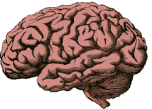 Neuroscience – the fascinating study of the brain.